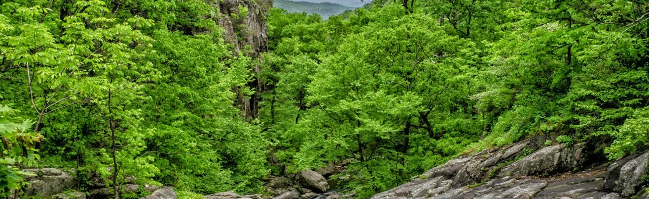 cascade tronc vert ELOFICASH